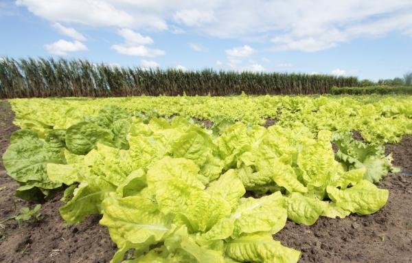 SEGURANÇA ALIMENTAR PAA Estadual tem orçamento de R$ 15 mi para compra de produtos da agricultura familiar