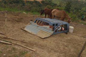 Durante-a-fiscalização-foram-encontrados-animais-sendo-criados-indevidamente-768×1024