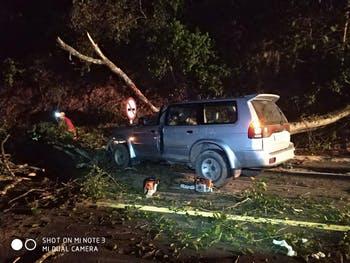 Queda de árvore em rodovia deixa passageiros de veículos feridos; um em estado grave