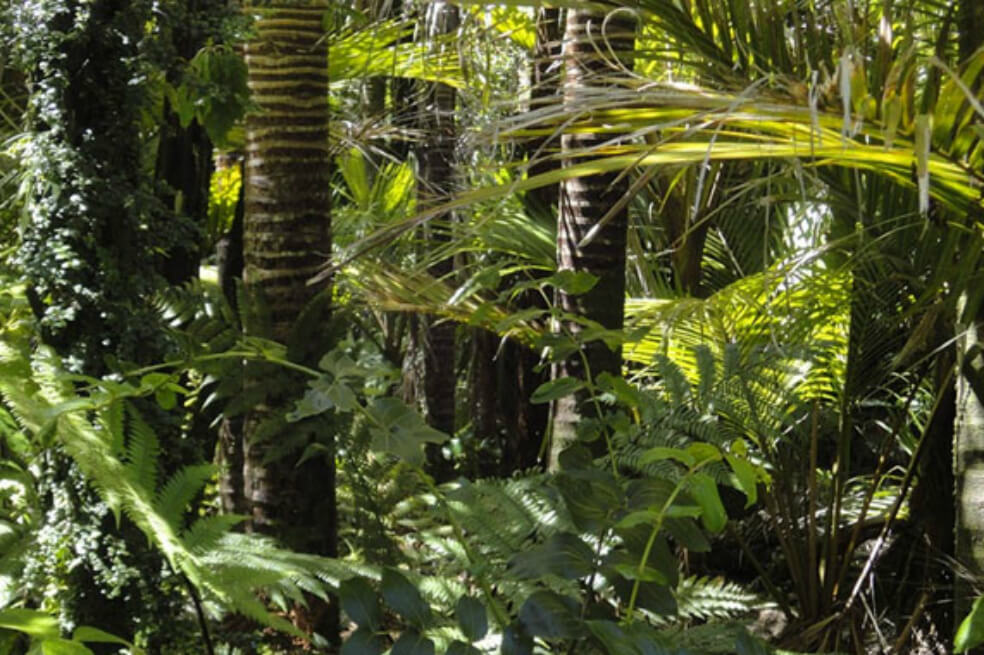 Uma nova espécie de árvore foi descoberta na Amazônia