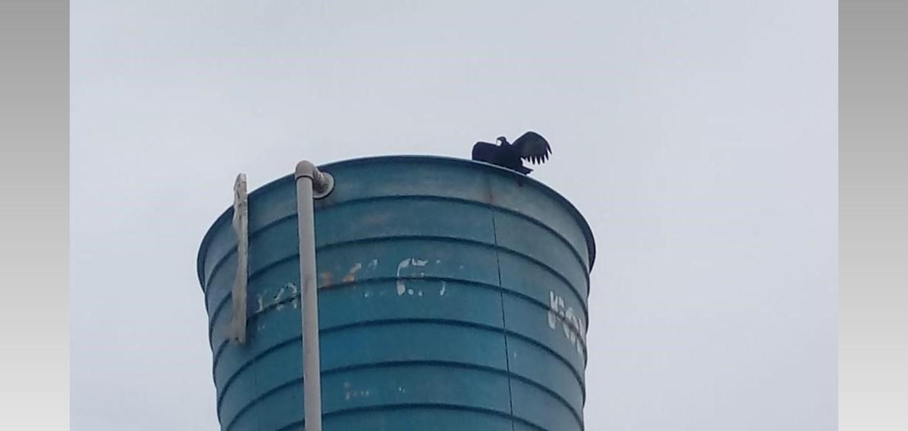 Caixa d'água da Casal sem cobertura é usada por urubus em conjunto habitacional de Taquarana
