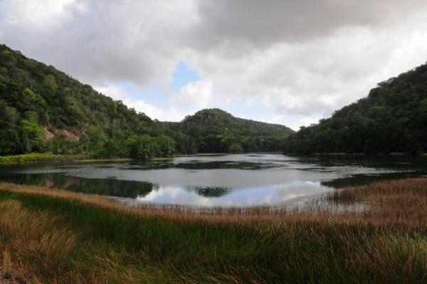 DIA MUNDIAL DO MEIO AMBIENTE AL amplia em mais de 130% o número de reservas ambientais