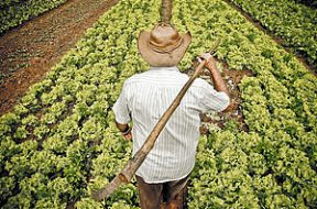 agricultor-fazenda-roca5