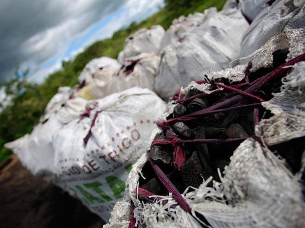 FPI do São Francisco flagra corte de vegetação  para a venda de carvão