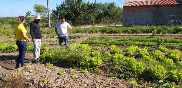 OÁSIS NO SEMIÁRIDO Assistência técnica garante diversificação de culturas aos produtores do Canal do Sertão