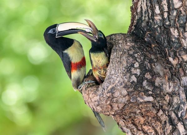 FAUNA ALAGOANA IMA abre exposição com finalistas do IV Concurso de Fotografia Ambiental
