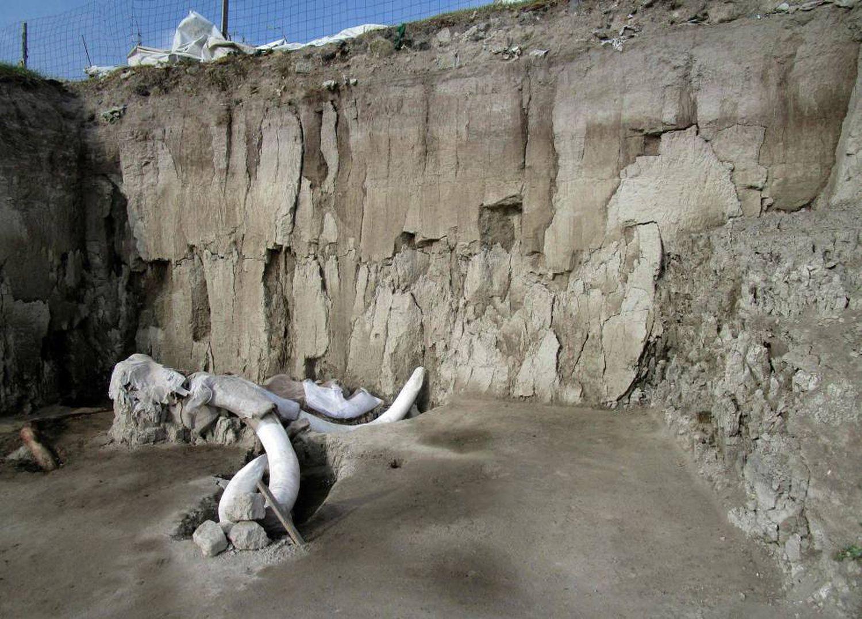 México encontra restos de 14 mamutes em armadilhas de caçadores