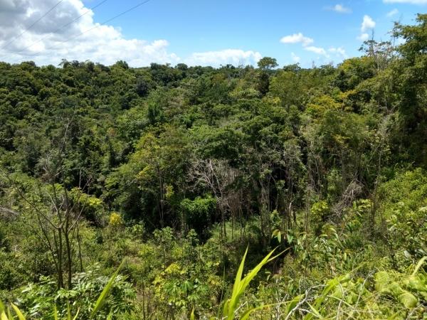 De forma inédita, Alagoas consegue zerar o desmatamento da Mata Atlântica