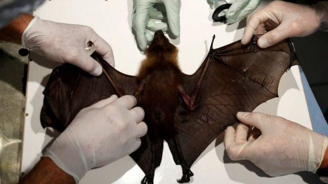 Coronavírus: doenças que passam de animais ao homem aumentam sem proteção ao meio ambiente, alerta ONU