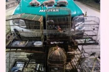 Caçador é preso com pássaros silvestres em cativeiro e animais abatidos, em Maribondo