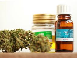 canabidiol-cannabis