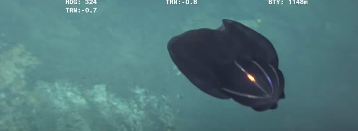 Criatura marinha se despedaça em frente às câmeras e intriga internautas; confira o vídeo